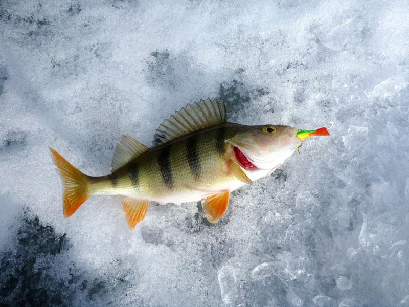 пропала рыба клевала