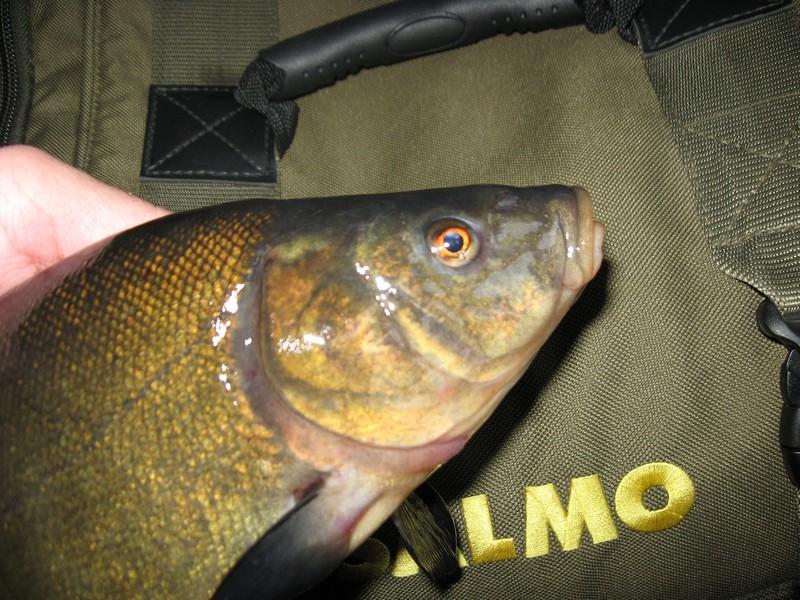 творог прикормка для рыбы
