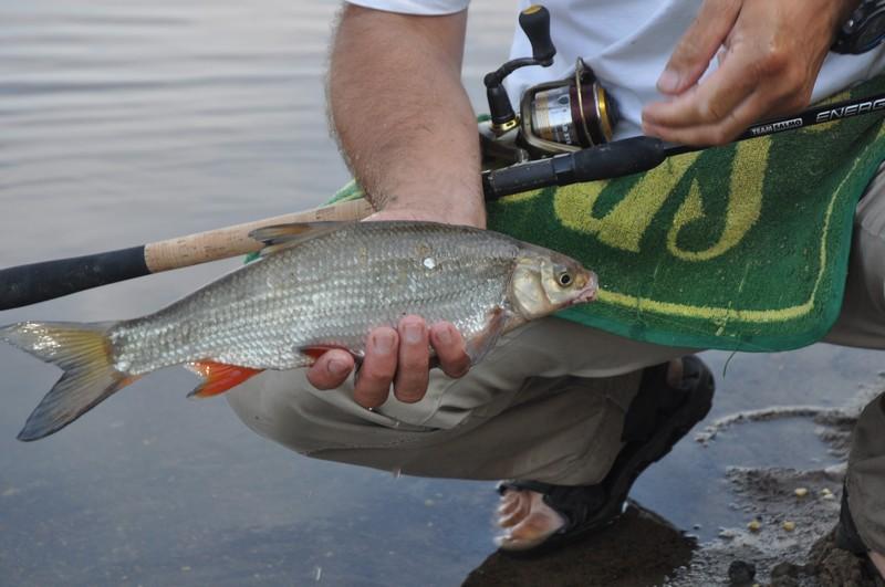 клев рыбы в чемаево