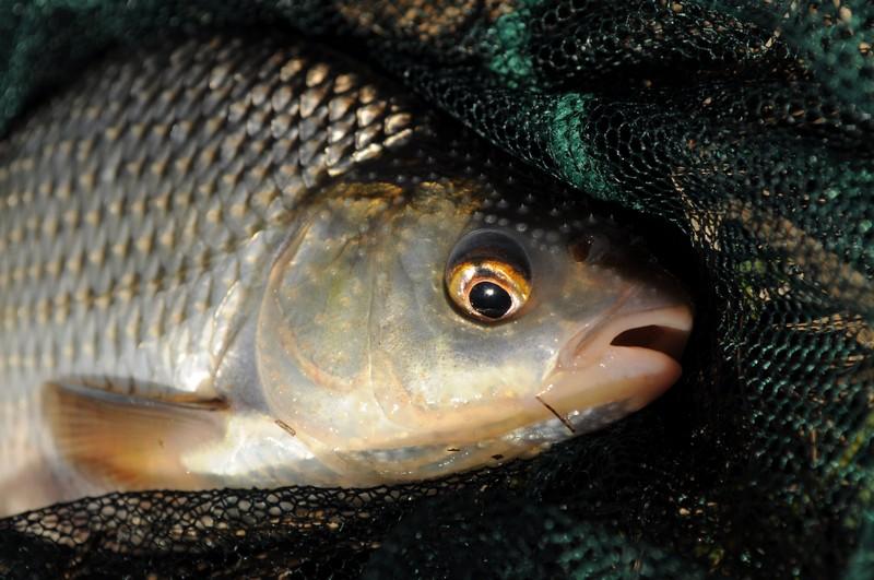 клюет ли рыба ночью
