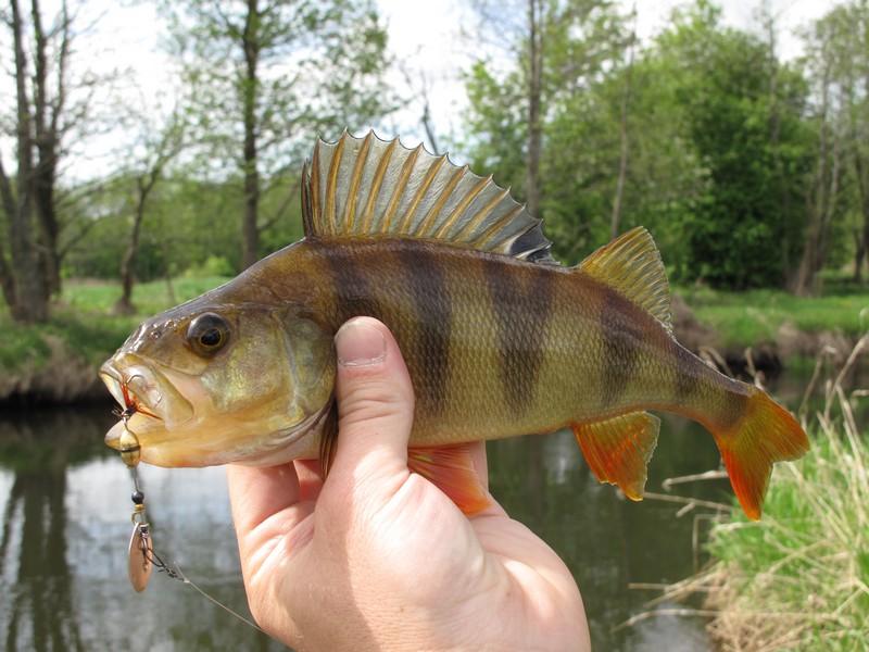 вертушки для рыбалки на реке