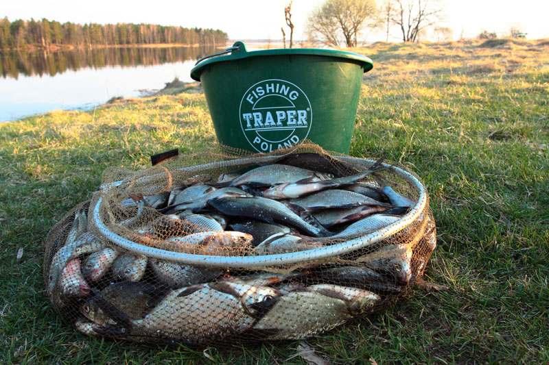 рыбалка ведро рыбы