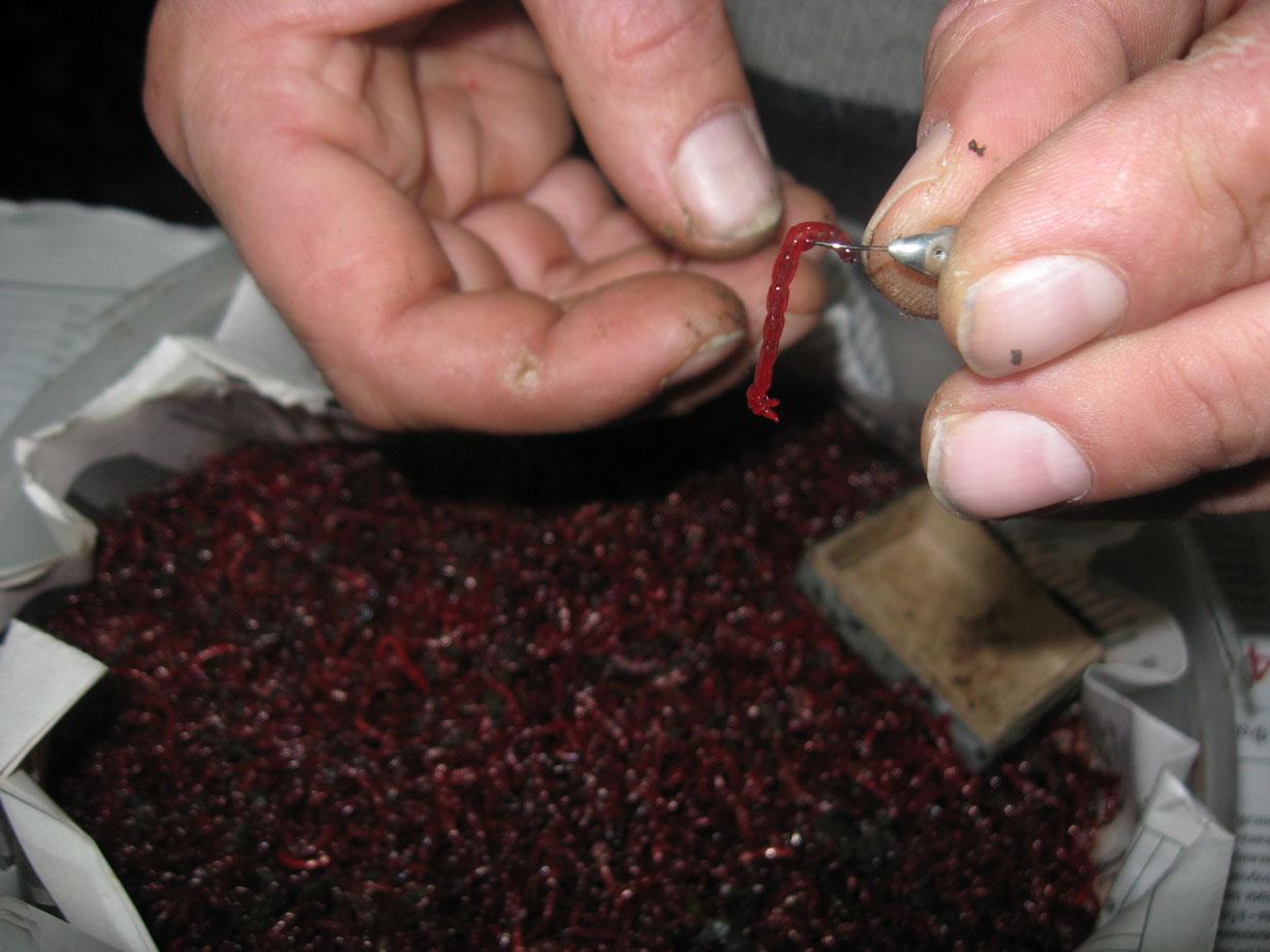 как на рыбалке найти мотыля